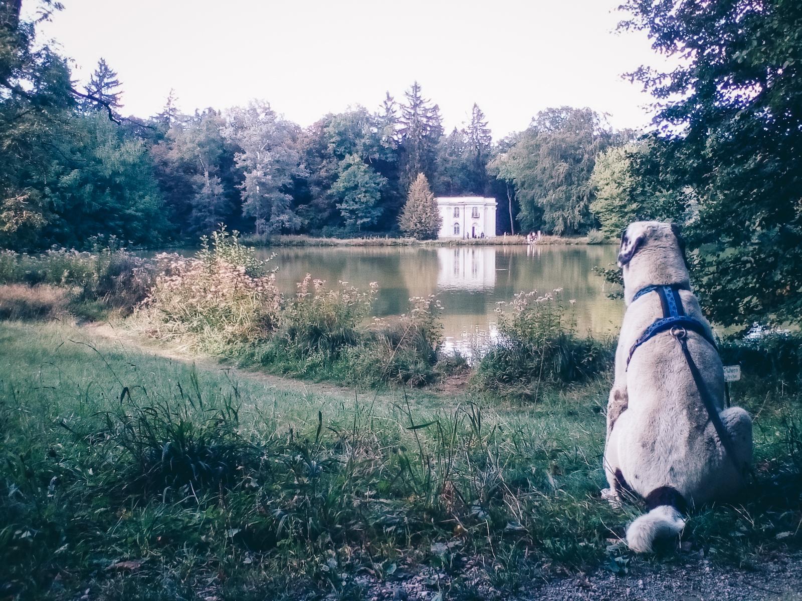 Aussicht passend für den Hund – ©Gassi Guide