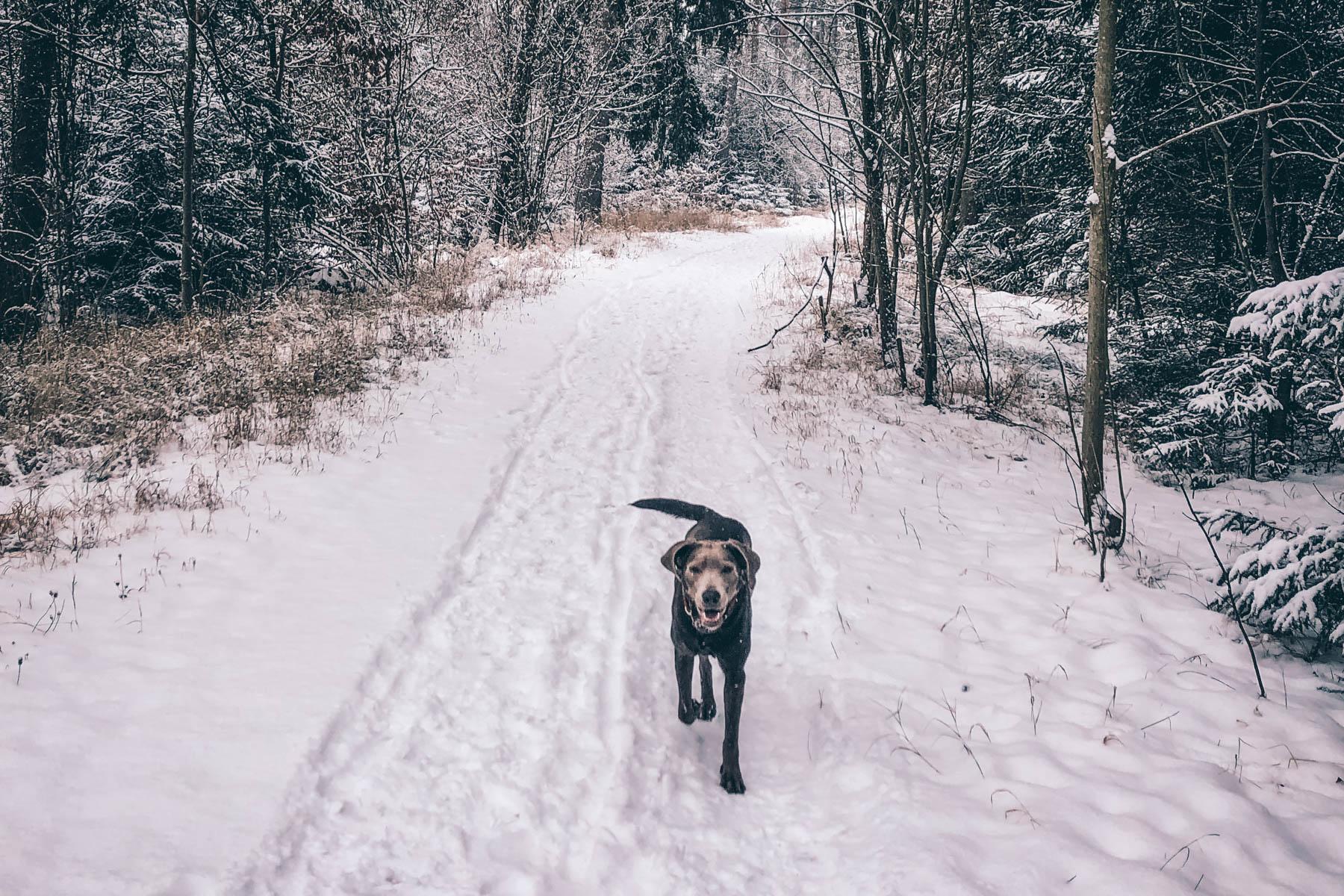 Officehund Neyla liebt das Winterwonderland im Perlacher Forst!  – ©wunderland media GmbH