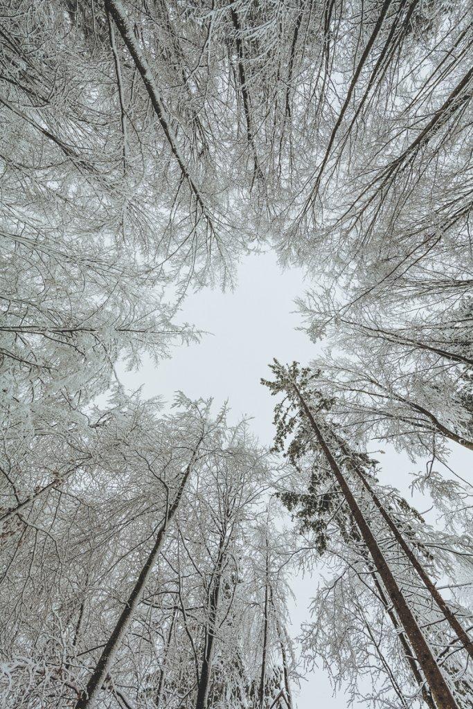 Waapiti, Winter Survival mit Tatjana und Momme Falk und den Teilnehmer Bj√∂rn, Emanuel und Veronika. An diesem verschneiten Winter Tag wurden im Wald nach Spuren von Tieren gesucht, im Wigwam ohne Feuerzeug ein Lagerfeuer entfacht und Schneeschuhe gebaut. – ©Klaus Fengler