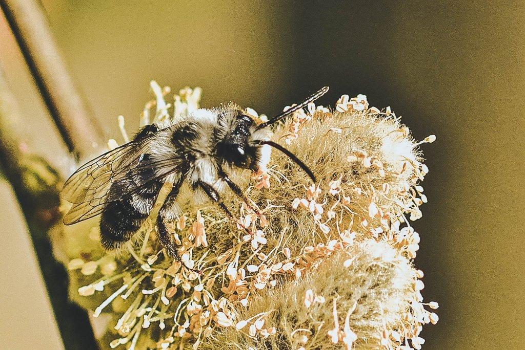 Geheimtipp Muenchen Muenchner Gschichtn Wildbienen 6