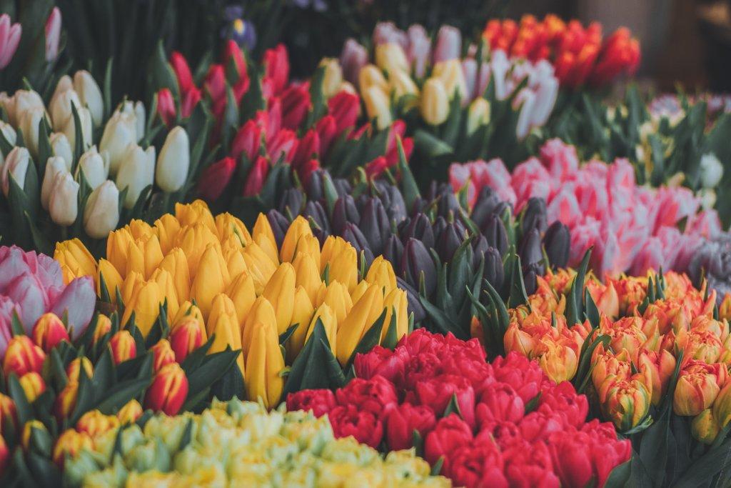 GeheimtippMuenchen TopX Blumenläden 5 – ©unsplash
