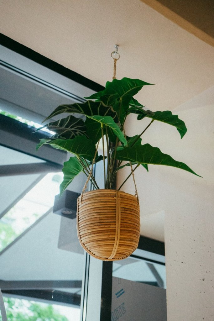 Eine Blumenampel mit grüner Pflanze in einem Topf aus Holz im Café Palmtree Club – ©Ben Sagmeister für wunderland media GmbH