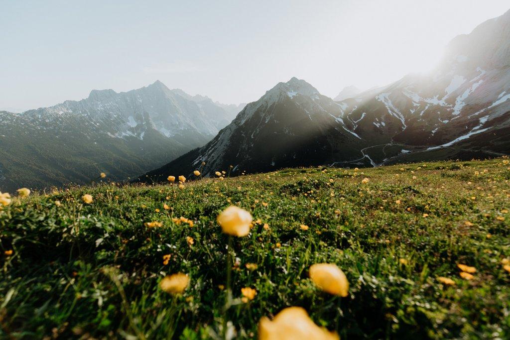 Blumenwiese Im Gaistal Leutasch (1) – ©Olympiaregion Seefeld