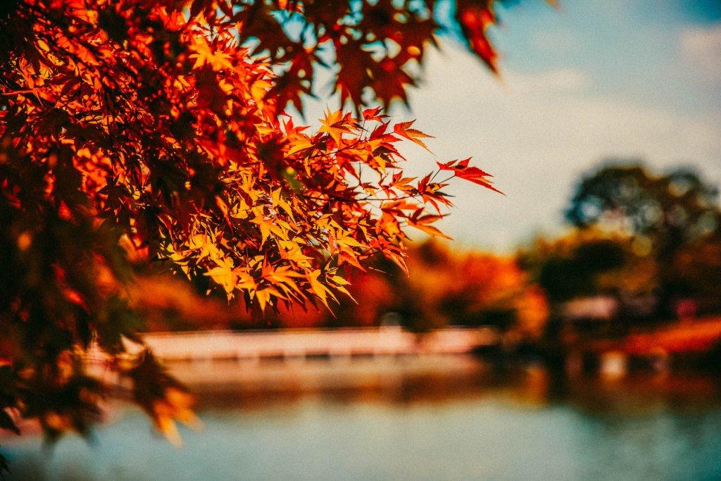 Geheimtipp Muenchen Herbst 6 – ©Unsplash